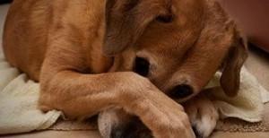 bad pup